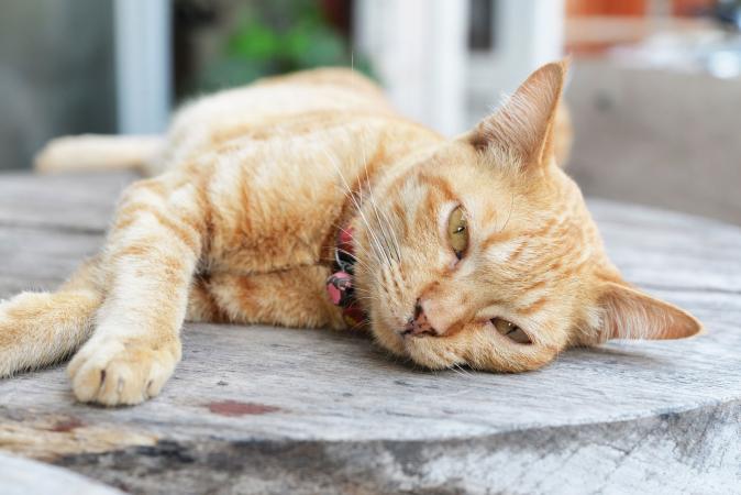 Gato enfermo acostado en el piso