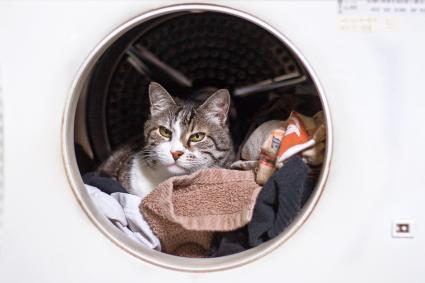 Gato en la lavadora