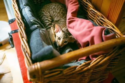 Gato en una caja con manta