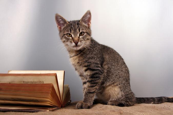 Gato rayado con libro