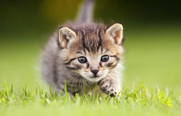 Gatito curioso