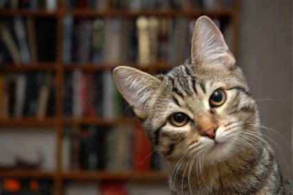 Gato y estantes
