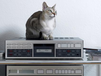 Gato sentado sobre estereo
