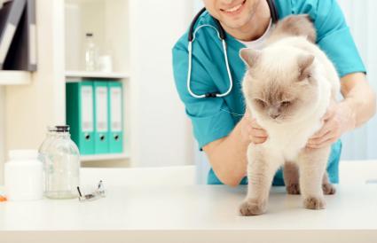 Veterinario examinando gato