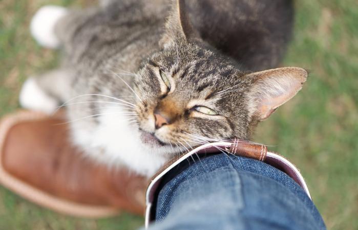 Gato frotando cariñosamente la pierna
