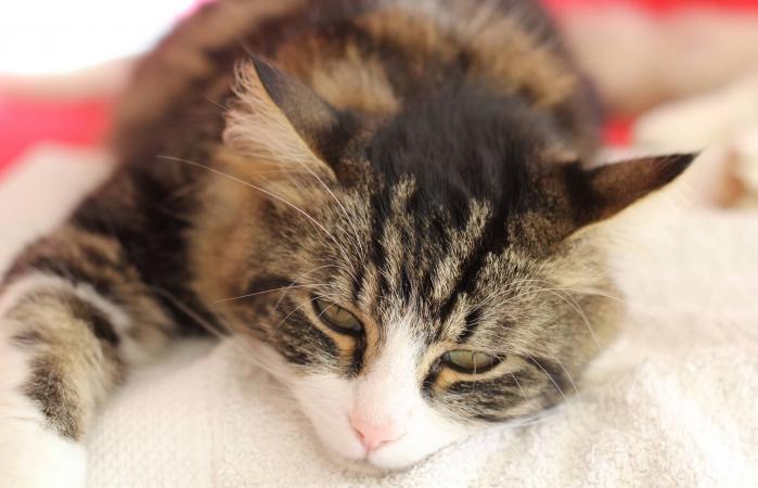 Gato constipado