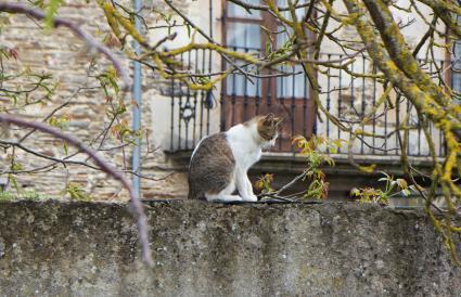Gato confundido