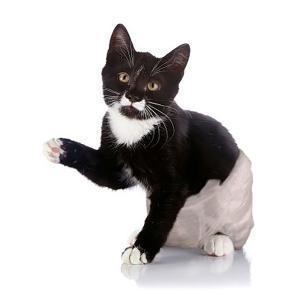 Gatito en pañales desechables