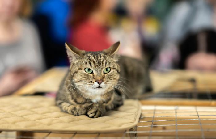 Gatito para adopción