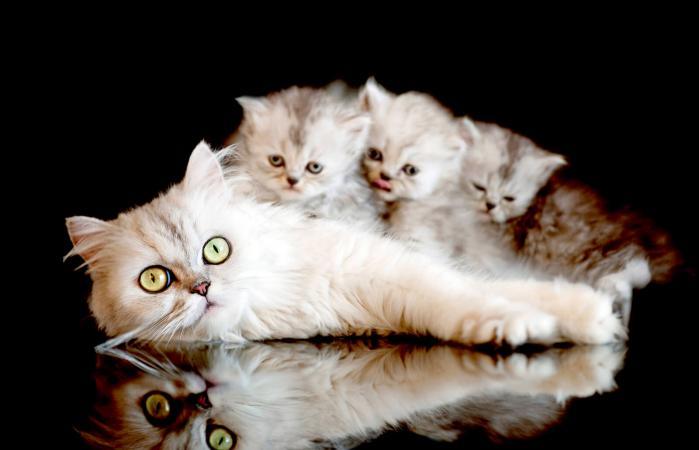 Mamá gato con gatitos