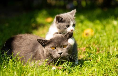 Gato con el gatito bebé sobre hierba