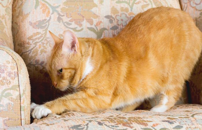 Gato atigrado rascando una silla
