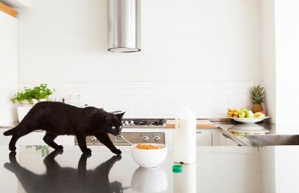 Gato negro sobre mostrador con leche y cereales