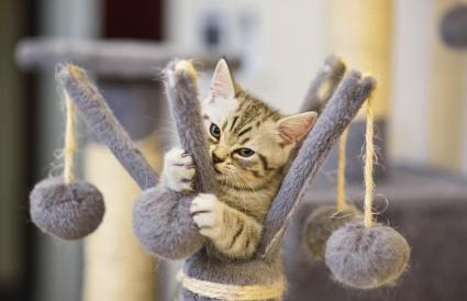 Gatito juguetón sobre juguete