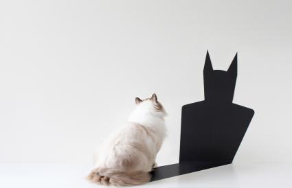Gato mirando la sombra de Batman
