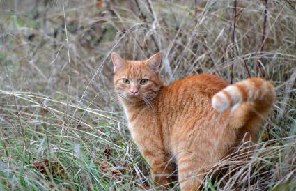 Retrato de gato sobre hierba