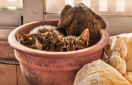 Dos gatitos escondidos en una maceta