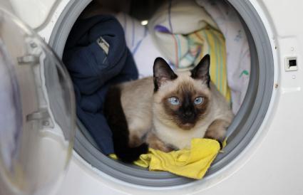 Gato escondido dentro de una lavadora