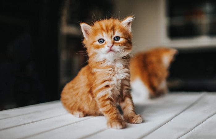 gatito en un ambiente doméstico