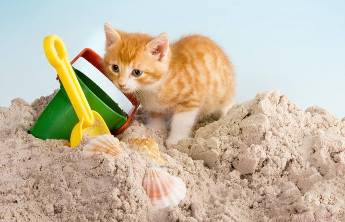 Gato en una caja de arena