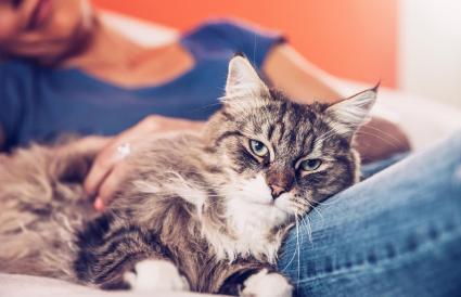Mujer y su gato siberiano relajándose en el sofá