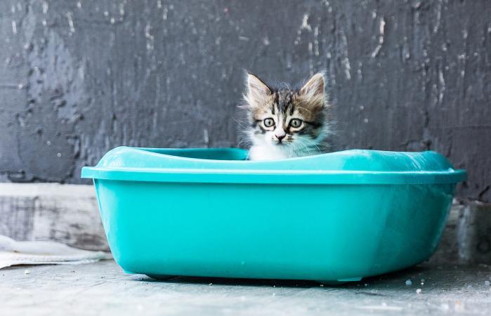 Gatito sentado en una caja de arena