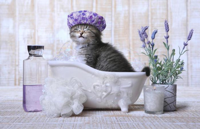 Adorable gatito en una bañera relajante