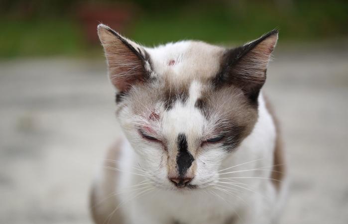 Primer plano de un gato con heridas