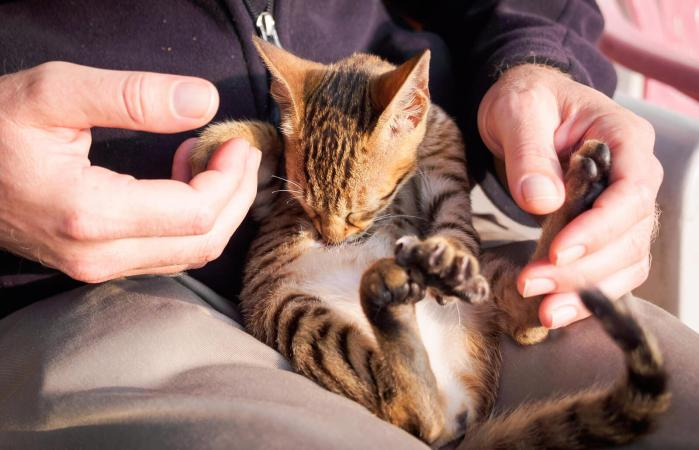 hombre sosteniendo gatito