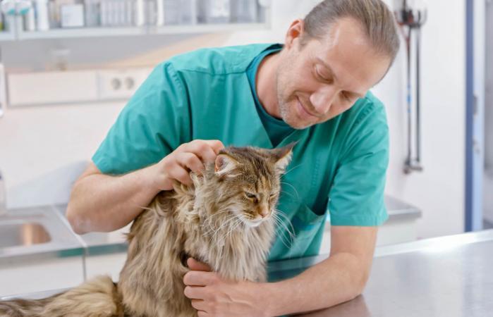 Veterinario acariciando a un gato en mesa de examen