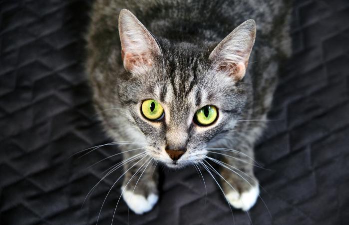 Gato con los ojos bien abiertos
