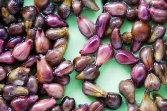 Does Grape Seed Extract Help with Celiac Disease?