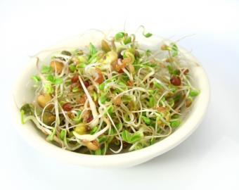 https://cf.ltkcdn.net/gluten/images/slide/75397-777x618-Sprouts.jpg