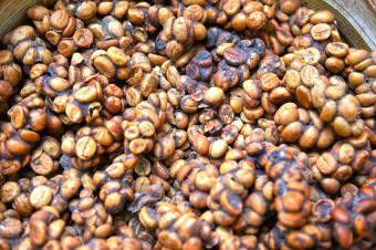 https://cf.ltkcdn.net/gourmet/images/slide/191281-850x566-Kopi-Luwak-Coffee-Bean.jpg