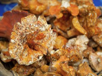 https://cf.ltkcdn.net/gourmet/images/slide/219929-850x638-lobstermushrooms.jpg