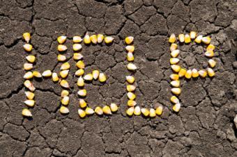 Word help written in corn