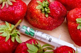 GMO strawberry concept photo