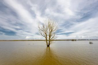 https://cf.ltkcdn.net/greenliving/images/slide/175166-849x565-global-warming-seaside-flooding.jpg