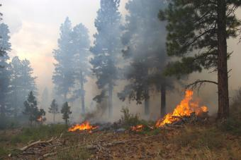 https://cf.ltkcdn.net/greenliving/images/slide/175168-848x566-global-warming-wildfires.jpg