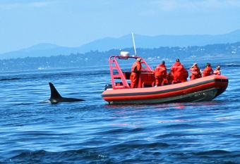 Ocean Wildlife Conservation