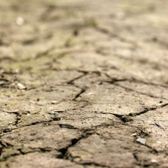 Drought Effects and Management
