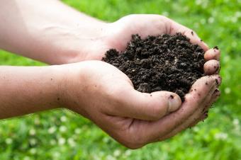 Gardener's hands holding dirt
