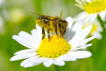 Why Are Bees Important?