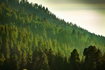 Sierra Nevada Mountains Forest