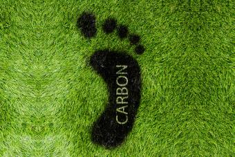 What Is the Average Carbon Footprint?