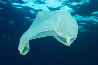 Plastic Bags in the Ocean