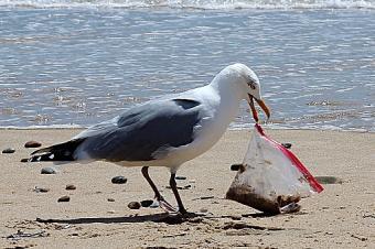 Seagull Holding Plastic Bag On Beach