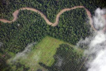 Why Rainforest Destruction Matters