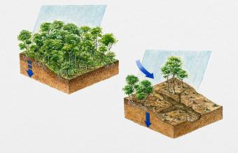 Erosion and Soil Damage