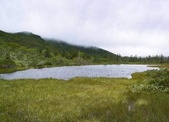 Pond and surrounding wetlands